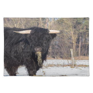 Scottish highlander bull eating hay in winter snow placemat