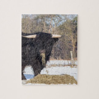 Scottish highlander bull eating hay in winter snow puzzle
