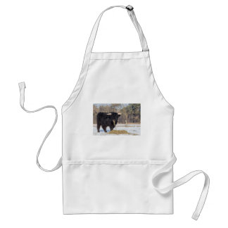 Scottish highlander bull eating hay in winter snow standard apron