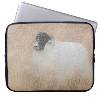 Scottish Moorland sheep case