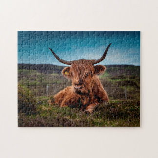 Scottish Oxen. Jigsaw Puzzle
