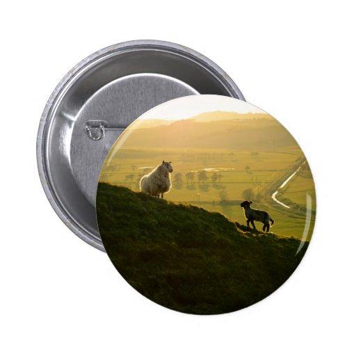 Scottish Sheep And Lamb Button