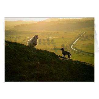 Scottish Sheep And Lamb Card