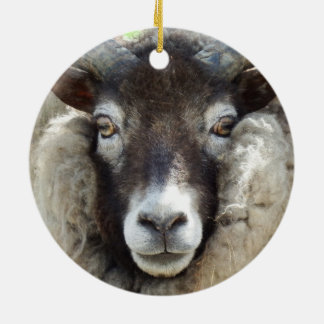 Scottish Sheep Close Up Round Ceramic Decoration