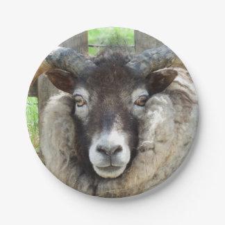 Scottish Sheep Paper Plate