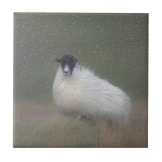 Scottish sheep tile