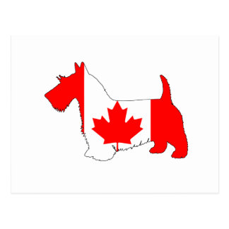 Scottish Terrier Canada Postcard