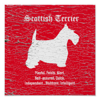 Scottish Terrier Personalize Poster