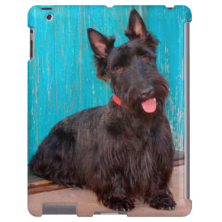 Scottish Terrier sitting by colorful doorway