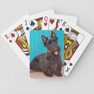 Scottish Terrier sitting by colorful doorway Playing Cards