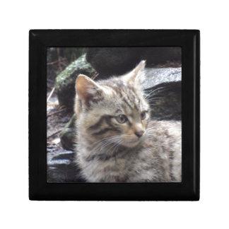 Scottish Wildcat Gift Box