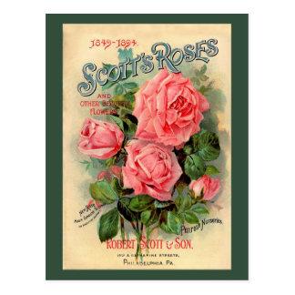 Scotts Roses Advertisement Postcard