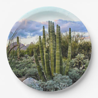 Scottsdale Succulent Sunset Paper Plate