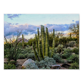 Scottsdale Succulent Sunset Poster