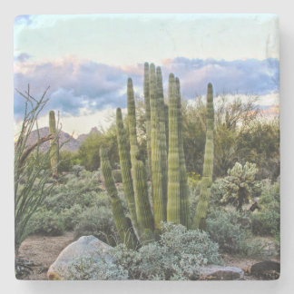 Scottsdale Succulent Sunset Stone Coaster