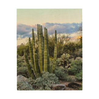 Scottsdale Succulent Sunset Wood Print