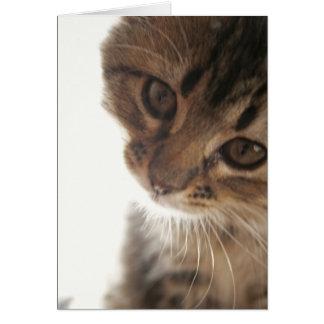 Scout: Curious Kitten Face blank card