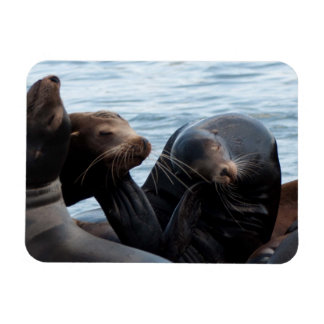 Scratching Sea Lions at West Port, WA Magnet
