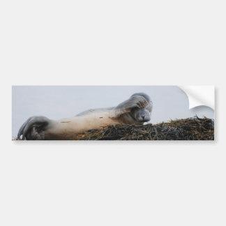Scratching Seal Bumper Sticker