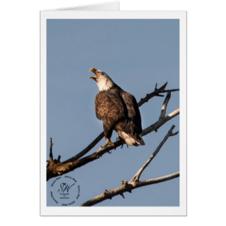 Screaming Bald Eagle Card