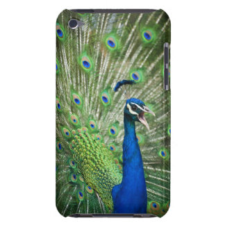 Screaming peacock Case-Mate iPod touch case