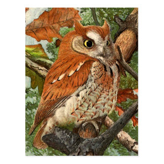Screech Owl (brown phase) Postcard