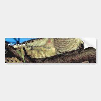 Screech owl bumper stickers