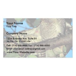 Screech owl business card templates