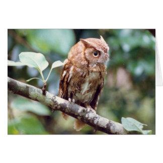 Screech Owl Card