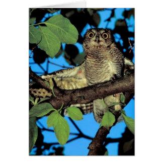 Screech owl greeting cards
