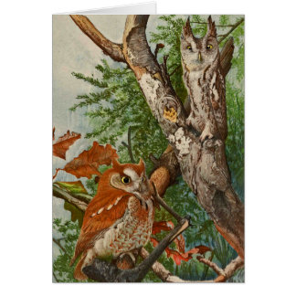 Screech Owl (color phases) Greeting Card