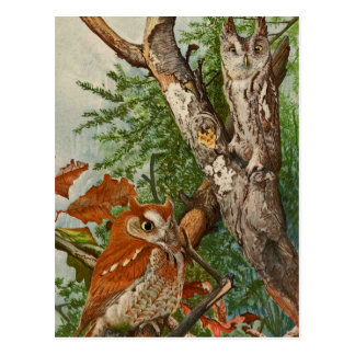 Screech Owl (color phases) Postcard
