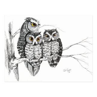 Screech Owl Family 2 Postcard