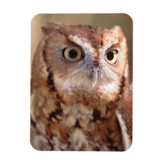 screech owl rectangular photo magnet