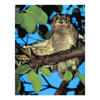 Screech owl custom flyer
