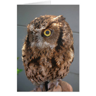 Screech Owl is Looking at You! Greeting Card