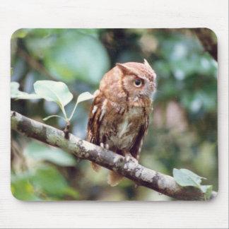 Screech Owl Mousepad