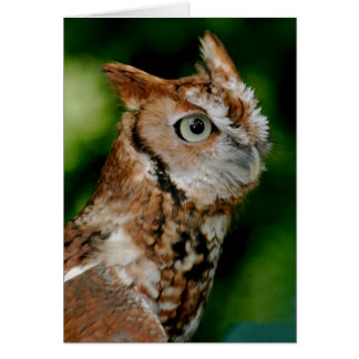 Screech Owl Notecard Greeting Card
