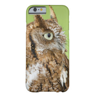 Screech owl portrait barely there iPhone 6 case