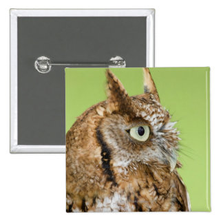 Screech owl portrait pins