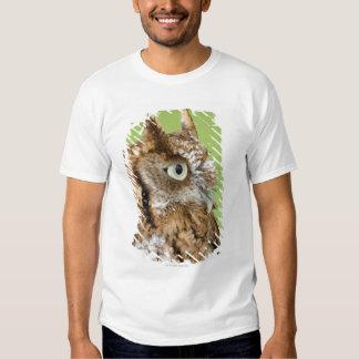 Screech owl portrait shirts