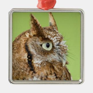 Screech owl portrait Silver-Colored square decoration