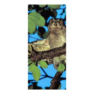 Screech owl rack card template