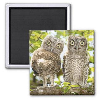 Screech Owls Chicks 2 Square Magnet
