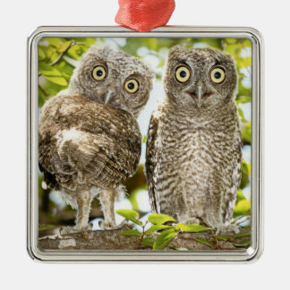 Screech Owls Chicks Christmas Tree Ornament