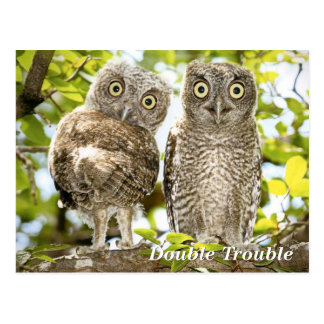 Screech Owls Chicks Postcard