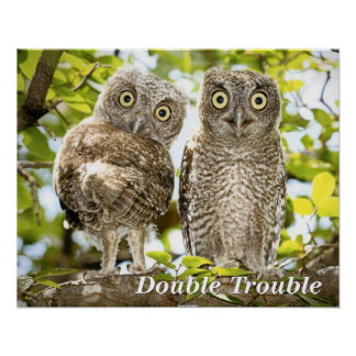 Screech Owls Chicks Poster