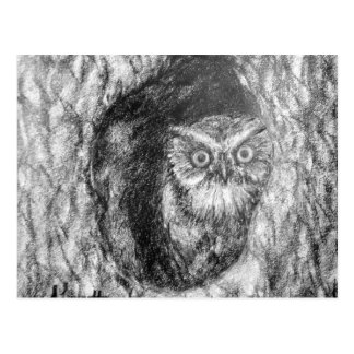 Screech Owls Owl Charcoal Black & White Drawing Postcard