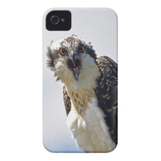 Screeching Osprey Fish-Eagle Wildlife Photograph iPhone 4 Case-Mate Cases