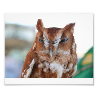 Screeching Owl Photo Print